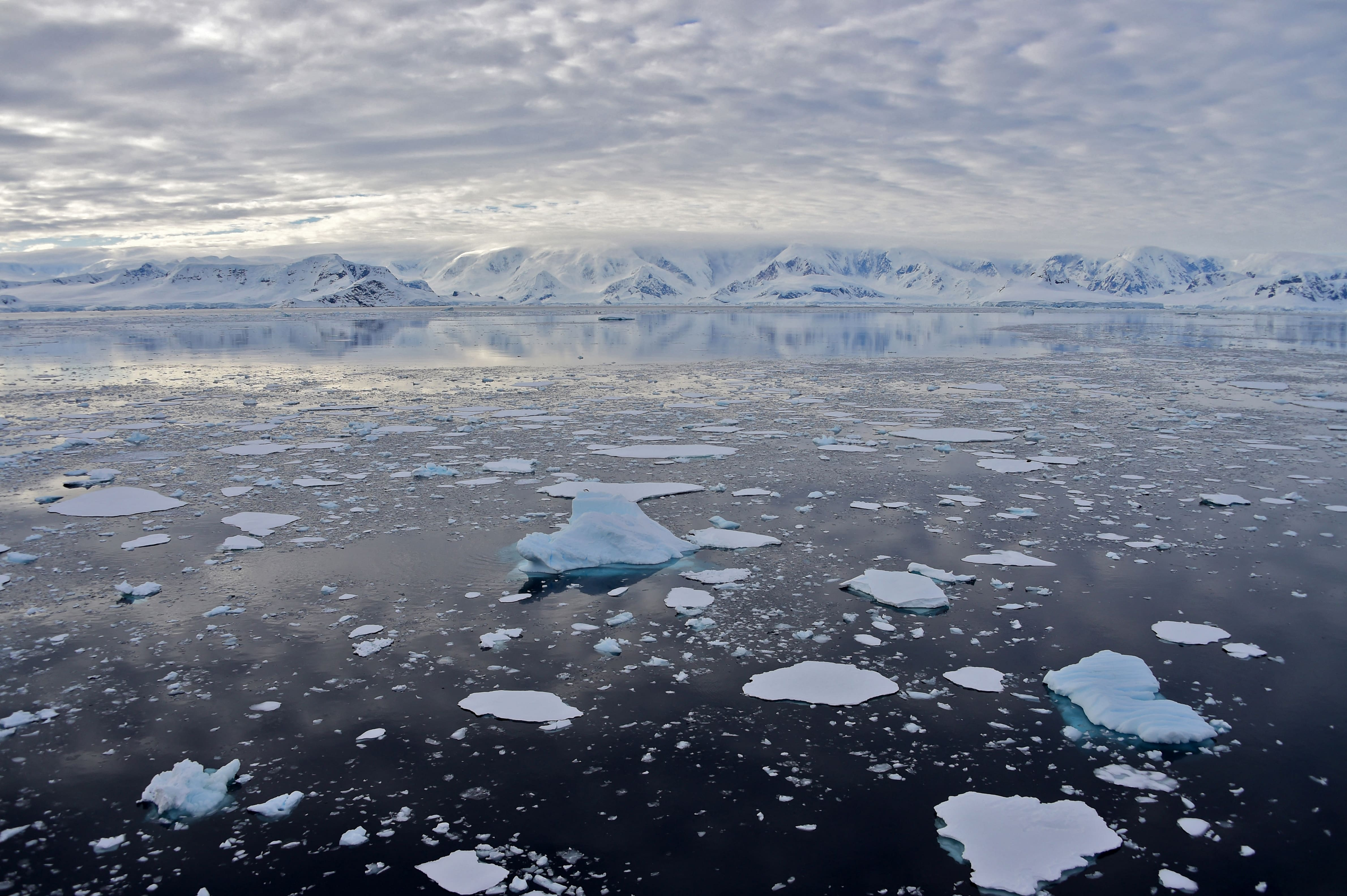 Des scientifiques découvrent accidentellement d'étranges créatures sous 900 mètres de glace en Antarctique - CNEWS
