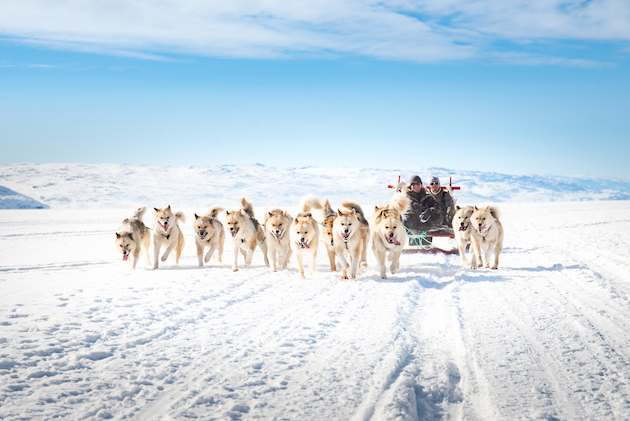 dogsledding_in_kangerlussuaqphoto_by_anders_beier_-_visit_greenland_5d5eaad074c24.jpg