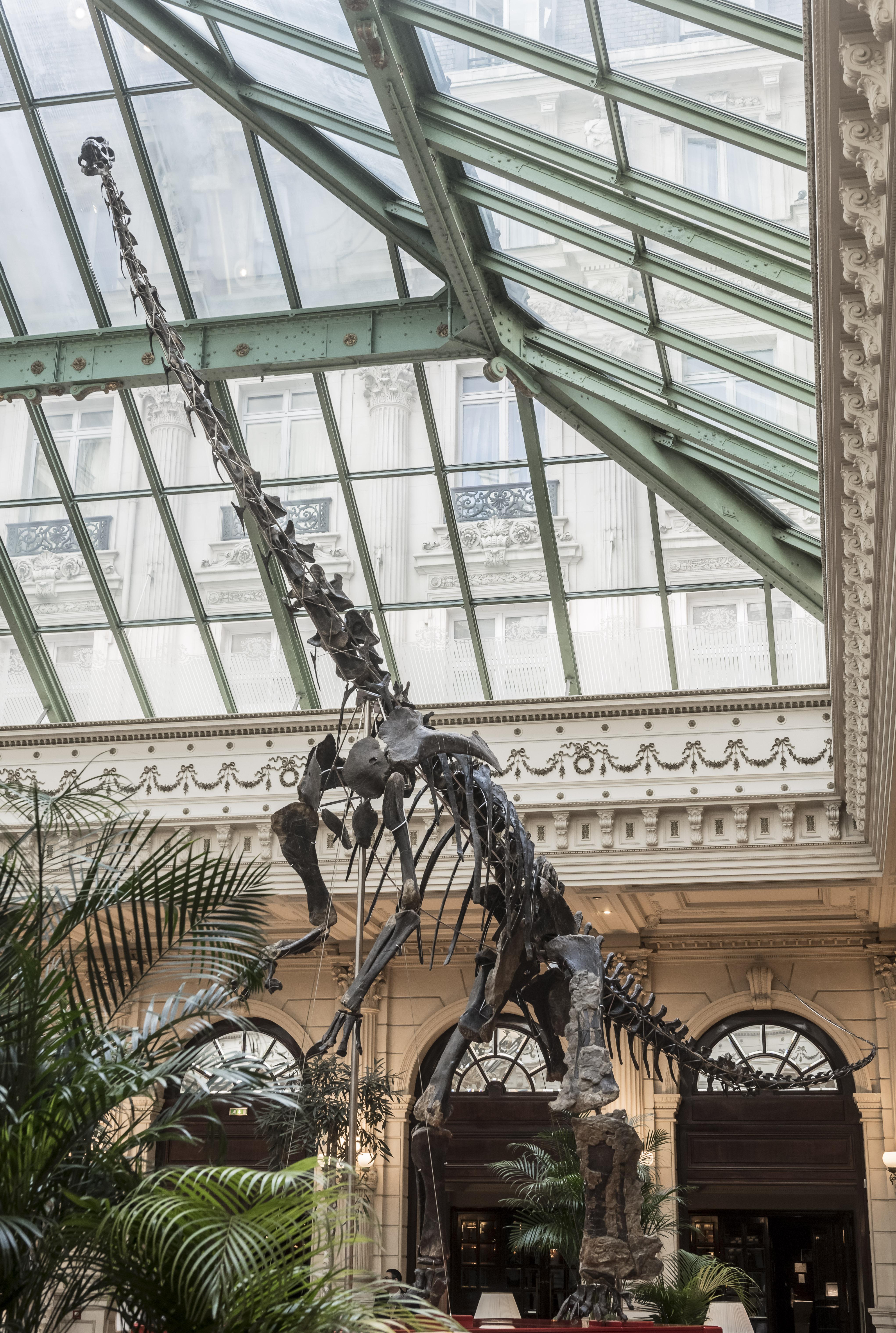 intercontinental_paris_le_grand_-_dinosaure_skinny_3_5cf9126f5ccbf.jpg