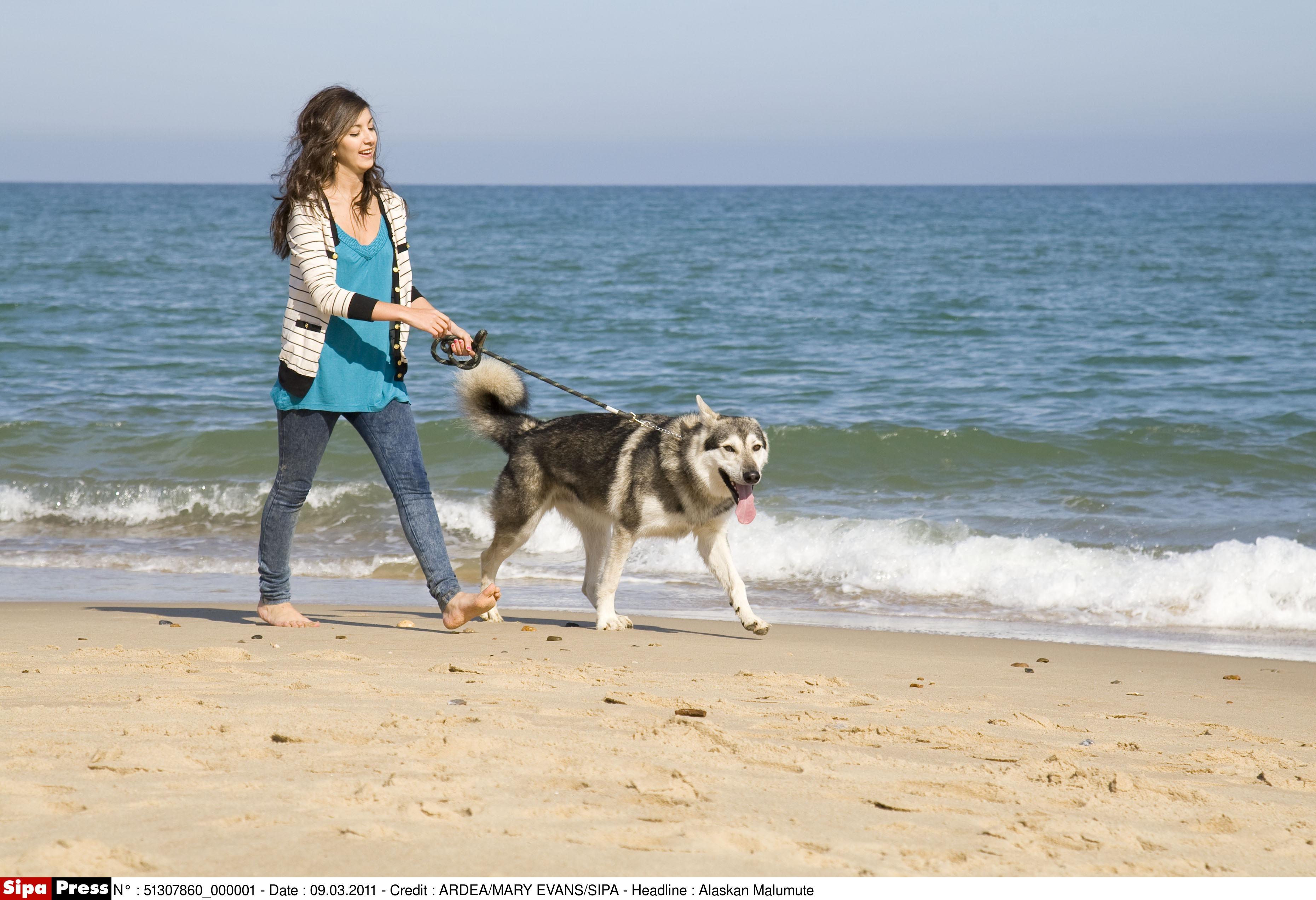 comment trouver une plage qui accepte les chiens pour les vacances. Black Bedroom Furniture Sets. Home Design Ideas