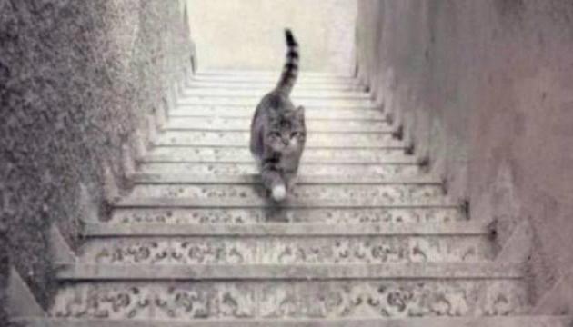 chat-qui-monte.jpg