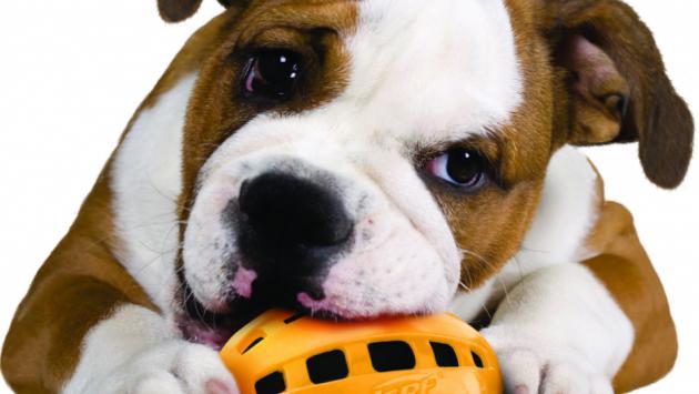 dm_img_secondaire_cnerf_dog_toys.jpg
