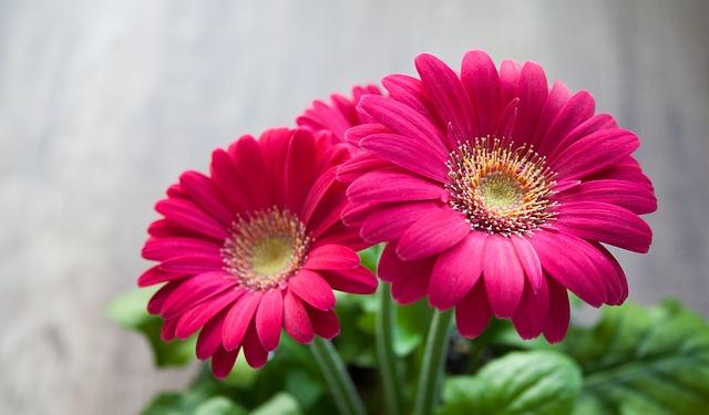 Fete Des Meres Quelles Fleurs Offrir Www Cnews Fr