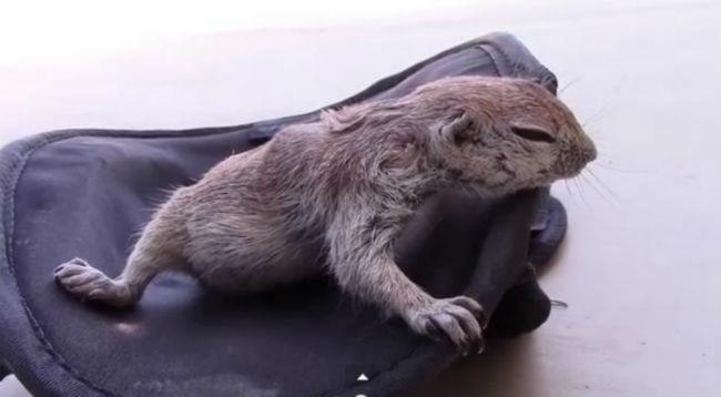 squirrel-saving_1.jpg
