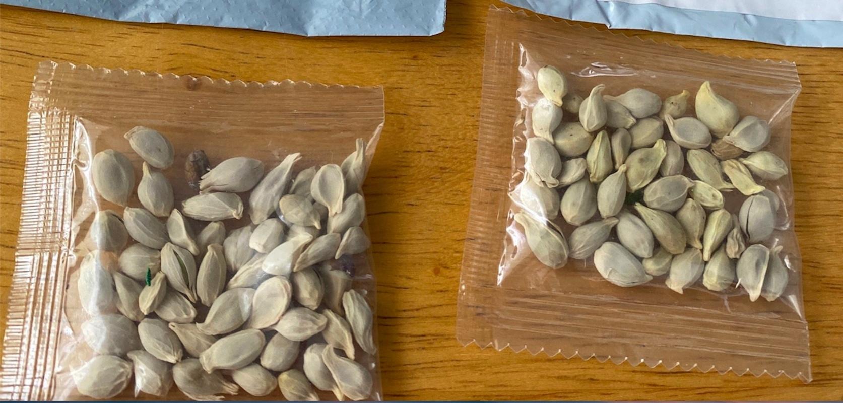 Si vous recevez ces sachets de graines venant de Chine, ne les plantez surtout pas