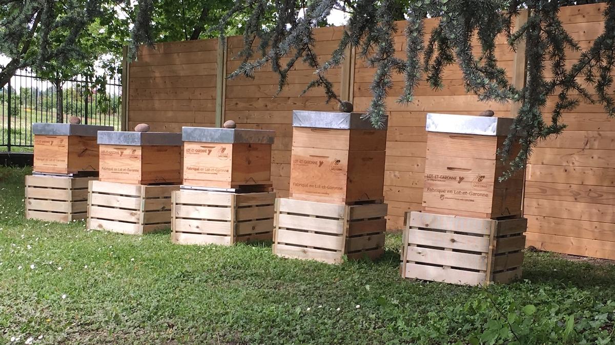 BeeGuard, la ruche connectée qui facilite le quotidien des apiculteurs