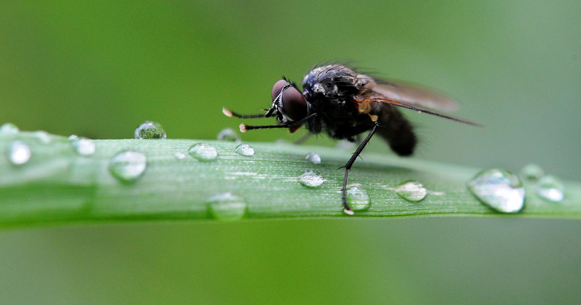 Comment Éloigner Les Mouches À L Extérieur astuce vacances : comment créer un épouvantail à mouches