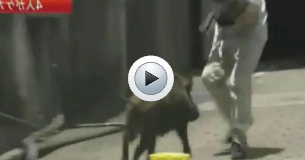 vidéo animaux sauvages