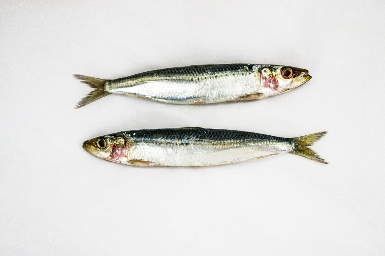 Les 5 bienfaits épatants de la sardine - CNEWS