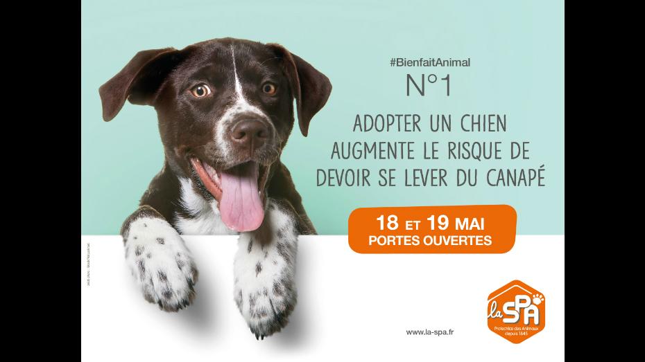 Portes Ouvertes De La Spa Les 18 Et 19 Mai Avoir Un Animal Est