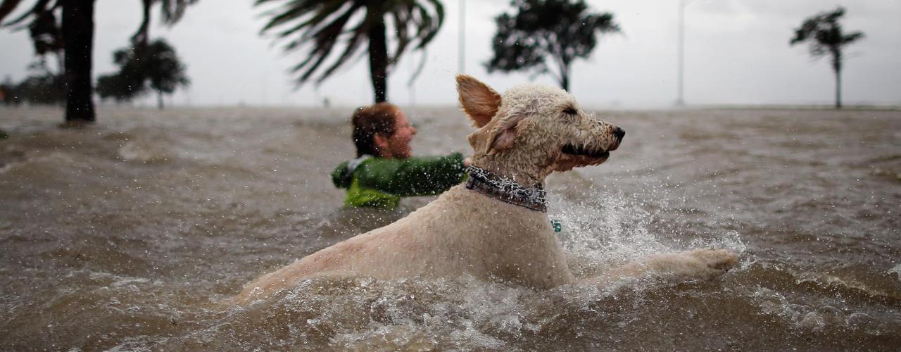Certains ont profité du débordement du lac Pontchartrain à la Nouvelle Orléans pour nager en pleine ville.