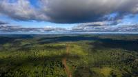 La forêt amazonienne est particulièrement touchée par la déforestation.