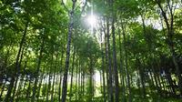 Une petite cure de deux heures au vert pourrait devenir un conseil de santé officiel.