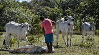 Les agriculteurs français et européens craignent que l'accord UE-Mercosur les place face à la concurrence déloyale des producteurs latino-américains.