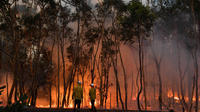 Les statistiques concernant les incendies en Australie sont effrayantes