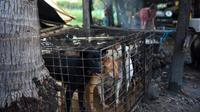 Cambodge Des rats dressés pour détecter les vieilles mines antipersonnel (VIDEO)