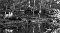 Des policiers examinent les lieux près de l'étang au bord duquel le corps de Robert Boulin a été découvert, le 30 octobre 1979, en forêt de Rambouillet [Michel Clement / AFP/Archives]