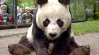 Picture taken on July 5, 2000 shows Bao Bao, the oldest panda bear in his enclosure in the zoo Berlin. The oldest male panda bear in the world, a gift from China to former German chancellor Helmut Schmidt, died on August 22, 2012 aged 34 in Berlin, its zoo said. AFP PHOTO / STEPHANIE PILICK GERMANY OUT[DPA]