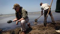 Des personnes retirent du pétrole d'une plage de Louisiane, le 19 avril 2011, un an après la marée noire dans le Golfe du Mexique [John Moore / Getty Images/AFP/Archives]