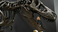 Un squelette restauré de tyrannosaure, au musée national de la nature et de la science de Tokyo [Toru Yamanaka / AFP/Archives]