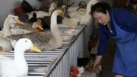 Une vendeuse de volaille nourrit ses poulets et ses canards le 16 avril 2013 au marché de Guiyang [ / AFP]