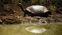 Une tortue géante aux Galapagos, photographiée en 2009 [Pablo Cozzaglio / AFP/Archives]