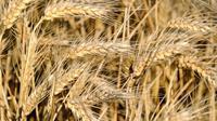 """""""Les prix agricoles vont rester élevés et connaître une grande volatilité dans les dix années à venir"""", estime le directeur général de la FAO José Graziano da Silva qui recommande donc la constitution de stocks nationaux de produits alimentaires de base.[AFP]"""