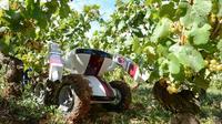 Le robot vigneron Wall-Ye V.I.N, le 13 septembre 2012 à Chalon-sur-Saone [Philippe Desmazes / AFP]