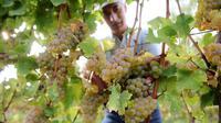 Un producteur de vin dans ses vignes près de Cahors, en octobre 2012 [Remy Gabalda / AFP/Archives]