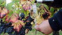 Un verre de vin dans un vignoble français [Remy Gabalda / AFP/Archives]