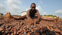 Un Ivoirien trie des graines de cacao à la coopérative de Moussadougou, le 28 novembre 2008 [Kambou Sia / AFP/Archives]