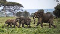 Des éléphants dans la réserve d'Amboseli, au kenya, le 30 décmebre 2012 [Tony Karumba / AFP/Archives]