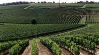 Vue d'un vignoble bordelais [Derrick Ceyrac / AFP/Archives]