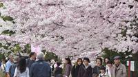 Des personnes sous des cerisiers en fleurs à Tokyo