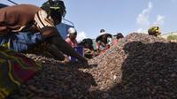 Exploitation de cacao en Côte d'Ivoire