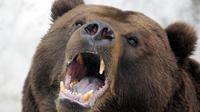 Une femelle ours a probablement attaqué l'homme pour protéger ses petits.