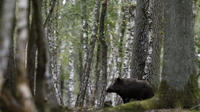 Photo prise dans la forêt de Rambouillet, dans les Yvelines (78).
