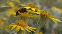 20 à 30 % de la population française est confrontée aux allergies liées à l'éclosion du pollen.