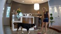 Le D Pet Hotel offre la possibilité aux new-yorkais de laisser leur chien dans un hôtel grand luxe.