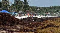 La plage de Tulum envahie par les sargasses, le 16 mai 2019 au Mexique [RODRIGO ARANGUA / AFP]