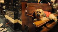 Un chien sur le banc d'une église [Brad Barket / Getty Images/AFP/Archives]