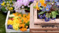 Parterre de fleurs [David Ebener / DPA/AFP/Archives]