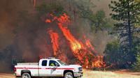 Les flammes rongent les forêts californiennes, comme près de Redding le 27 juillet 2018 [JOSH EDELSON / AFP]