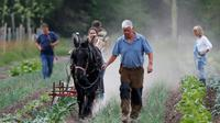 Charles Hervé-Gruyer (au centre) laboure un champ à l'aide d'un cheval, dans sa ferme du  Bec-Hellouin le 25 mai 2018 [CHARLY TRIBALLEAU / AFP/Archives]