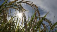 Climat: le mois dernier a été le mois de mai le plus chaud jamais enregistré [ROMEO GACAD / AFP/Archives]