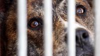 Un chien au refuge de la Société protectrice des animaux (SPA) à Gennevilliers, le 16 octobre 2007 [Joel Saget / AFP]