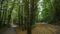 La forêt d'Istanbul où sont menées recherches sur la disparition du journaliste saoudien Jamal Khashoggi, le 19 octobre 2018 [OZAN KOSE / AFP]