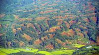 Vue aérienne de glissements de terrain dans la localité d'Atsuma (préfecture d'Hokkaido), le 6 septembre 2018 [JIJI PRESS / JIJI PRESS/AFP]
