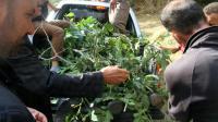 Des villageois recouvrent de branchages le corps d'un soldat tué dans une attaque le 7 septembre 2015 à Hakkari dans la région de Daglica [- / DICLE NEWS AGENCY/AFP]