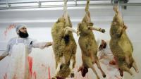 Des employés préparent des moutons avant l'Aïd al-Adha (fête du sacrifice musulmane) dans un abattoir du Mans le 4 octobre 2014  [JEAN-FRANCOIS MONIER / AFP/Archives]